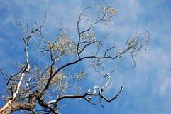 Perspectiva das filiais de árvore Fotos de Stock Royalty Free