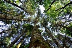 Perspectiva das madeiras Fotos de Stock