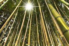 Perspectiva de bambu da floresta Fotografia de Stock Royalty Free