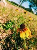 perspectiva de la flor Fotografía de archivo
