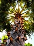 Perspectiva de la palmera Imágenes de archivo libres de regalías