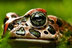 Perspectiva de la rana Imagen de archivo