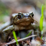 Perspectiva de la rana de una rana verde Foto de archivo