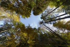 Perspectiva de los árboles Fotos de archivo libres de regalías