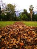 Perspectiva de una huerta Royaltyfria Bilder