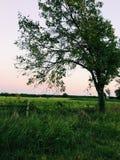 Perspectiva del árbol Foto de archivo libre de regalías