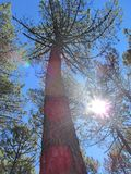 A perspectiva do céu na floresta Foto de Stock Royalty Free