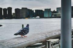 Perspectiva dos pássaros Imagens de Stock Royalty Free