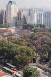 A perspectiva elevada mostra construções e árvores no Sao Paulo Brazil fotos de stock royalty free