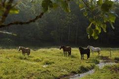 Perspectiva en un pasto del caballo Imagenes de archivo