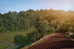 Perspectiva larga do cultivado arquivado nos montes com spac da cópia imagens de stock royalty free