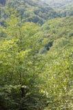 Perspectiva sobre poco bosque cárpato Fotografía de archivo libre de regalías
