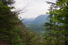 Perspectiva verde Imagen de archivo