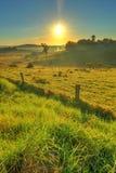 Perspectiva vertical da manhã enevoada em Milton Fotos de Stock Royalty Free