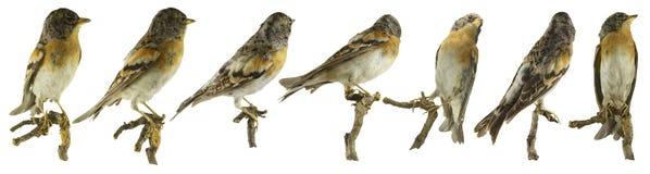 Perspectivas del pájaro Imagen de archivo libre de regalías