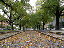 Perspective. Trees line a tram road in Melbourne during autumn stock photography
