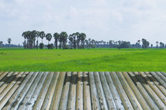 Perspective bamboos wood design natural field green backgrounds royalty free stock image
