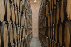 Perspective of barrels for mezcal aging Stock Images