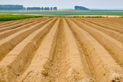 Perspective of cultivated farmland in northern france. Cultivated section of farmland in northern france with rows and perspective royalty free stock photography