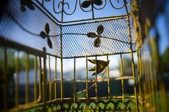 Perspective d'oiseaux d'animal familier dans la cage Photographie stock libre de droits