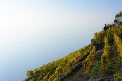 Perspective d'un lac des terrasses de vignoble Photo libre de droits