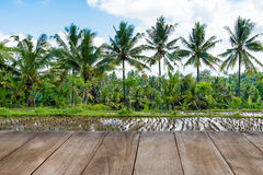 Perspective empty wooden table in front of harvested rice field and coconut trees Stock Image