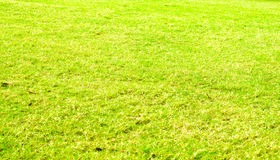 Perspective green grass texture background, Natural background Royalty Free Stock Photo