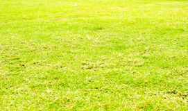 Perspective green grass texture background, Natural background Stock Photos