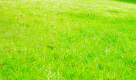 Perspective green grass texture background, Natural background Royalty Free Stock Photos