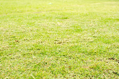 Perspective green grass texture background, Natural background Stock Photography
