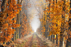 Perspective lane on a foggy morning in autumn Stock Photos