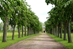 Perspective Look to the Watch Tower. Alley with green trees Royalty Free Stock Photo