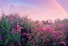 Beautiful rainbow. Perspective of nature royalty free stock photo