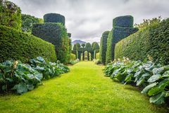Perspective on oddly shaped yews in the garden of Plas Brondanw, North Wales stock images