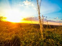 Sunset for a plant Royalty Free Stock Photo