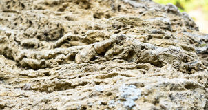 Perspective Rough porosity stone texture background Royalty Free Stock Photo