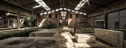 Shed in abandoned factory, central perspective. Perspective shed in abandoned factory, with vegetation and plants grown in the interior Stock Image