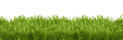 A perspective view of a green lush Royalty Free Stock Image