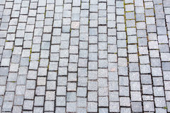 Perspective View of Monotone Gray Brick Stone on The Ground for stock photography