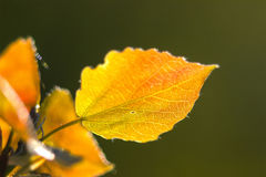 Perspective view on orange leaves Stock Photography