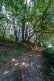Perspective view of a path inside a thick forest with typical At. Lantic vegetation in Galicia Spain Stock Image