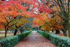 Perspective view of a pathway under fiery foliage of an autumn forest in beautiful Kyoto Gyoen  Imperial Garden  in Kyoto Stock Photo