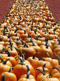 Perspective View of Pumpkin Row. Perspective view of a row of pumpkins squared up neatly at a fall produce market Royalty Free Stock Images