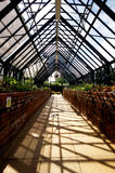 Perspective view in an alpine greenhouse. Wisley, Surrey. A greenhouse at Wisley, containing alpine plants, seen from one end, with the narrowing view of the Royalty Free Stock Photos