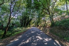 Perspective view of a very little transited road within a thick. Forest with typical Atlantic vegetation in Galicia Spain Royalty Free Stock Photo