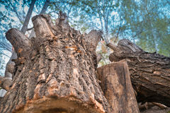 Perspective view of wooden logs and tree stumps with sky Royalty Free Stock Photo