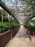 Perspective Walkway. A garden walkway with perspective lines of view Stock Photos