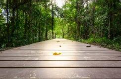 Perspective of wood bridge in deep Stock Images