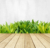Perspective wood over green tree leaves over white cement wall background. Perspective wood over green tree leaves and white wall background, product display stock photo
