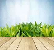 Perspective wood over tree leaves and blue cement wall Royalty Free Stock Photo